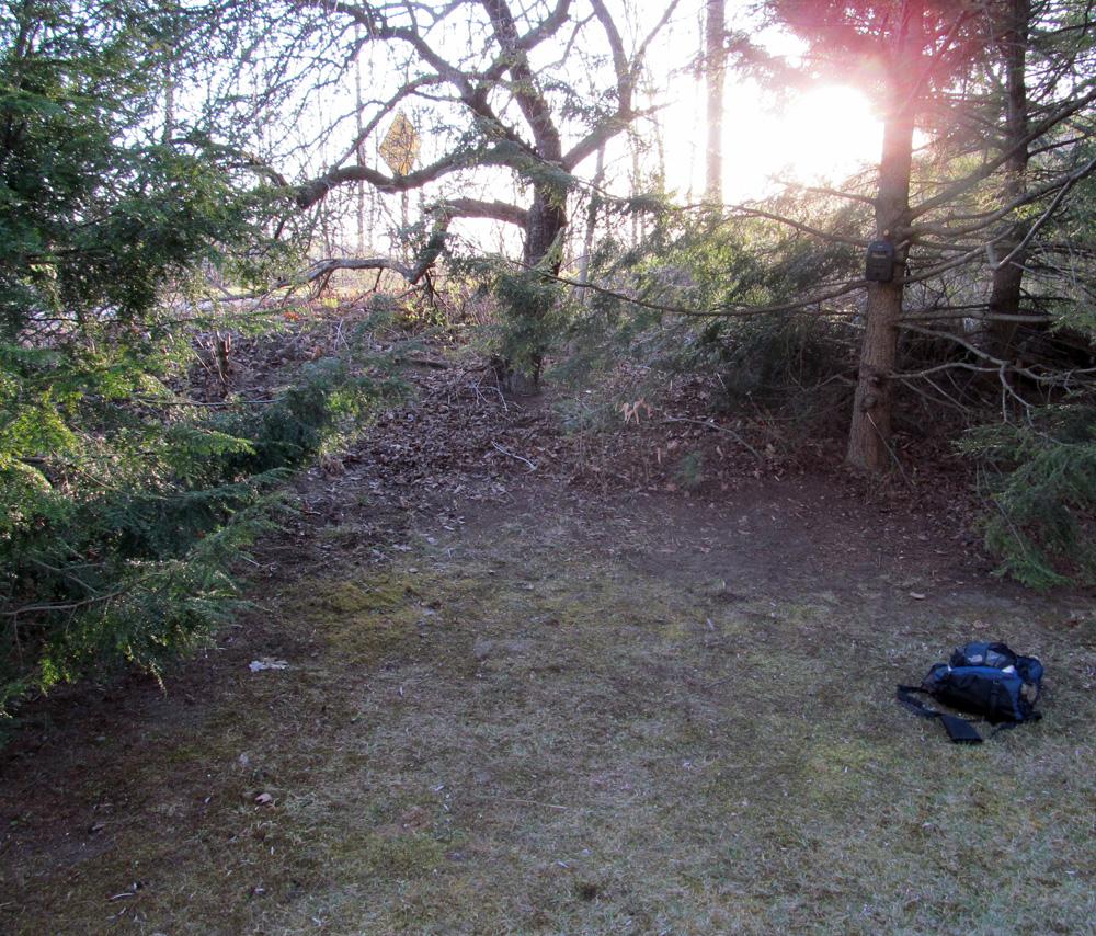 VT Trail Cam Photo